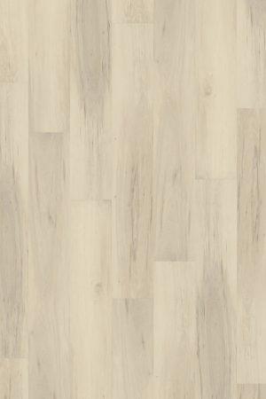2851 Milky Maple