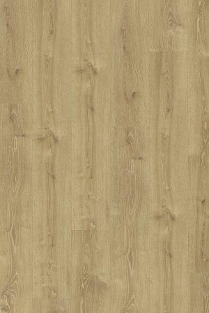 Oak virginia V4
